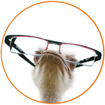 ostrich with glasses